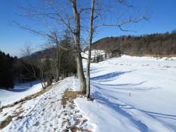 природа, зима, лес, снег