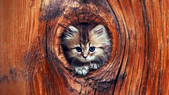 животные, коты, дупло, котенок, дерево