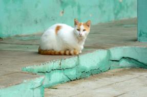 животные, коты, кошка, фон, взгляд