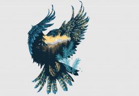 крылья, фон, птица, природа, сокол, арт
