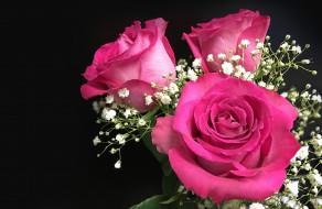 цветы, розы, гипсофила, букет, бутоны