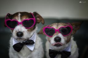 юмор и приколы, собаки, очки, дом