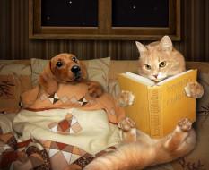 книга, Creative, Dogs, ночь, кот, одеяло, собака, Cats