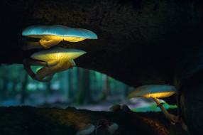 обои для рабочего стола 2048x1365 природа, грибы, свет, боке, макро, дерево, лес, фонари