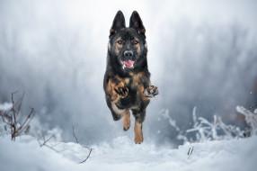 животные, собаки, зима, бег, собака