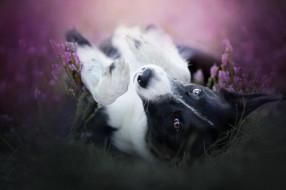 животные, собаки, природа, собака, друг