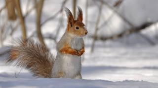 животные, белки, зима, снег, грызун, рыжая, белка