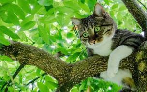 животные, коты, серый, кот, с, зелеными, глазами, сидит, на, ветке