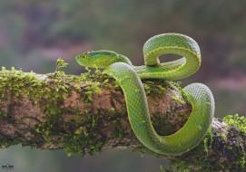 животные, змеи,  питоны,  кобры, мох
