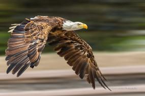 животные, птицы - хищники, птичка