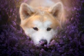животные, собаки, взгляд, собака, природа