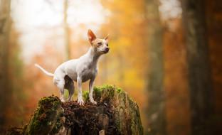животные, собаки, пес