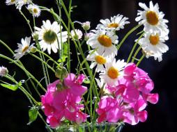 цветы, разные вместе, ромашки