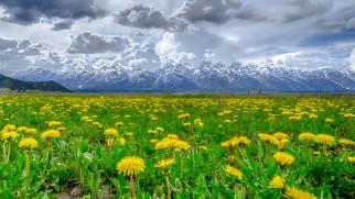 цветы, одуванчики, облака, горы