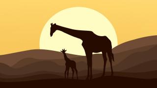 векторная графика, животные , animals, жираф, закат