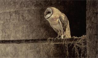 рисованное, животные, сидит, птица, ветка, дерево, филин, сова