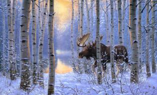рисованное, животные, берёзы, деревья, снег, зима, зверь, лес, лось