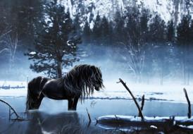 рисованное, животные, чёрный, водопой, лес, лошадь, вода, конь