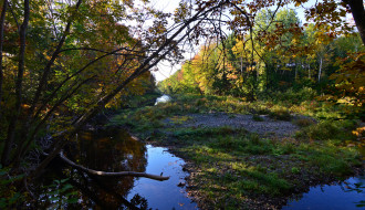 природа, реки, озера, лес, река