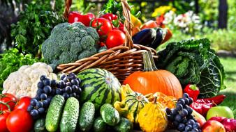 обои для рабочего стола 2560x1440 еда, фрукты и овощи вместе, арбуз, виноград, помидоры, огурцы, капуста, брокколи