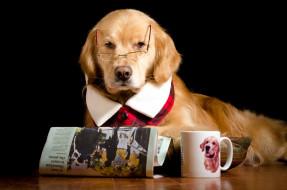 собака, чашка, газета, очки