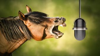Лошадь, микрофон, ржание