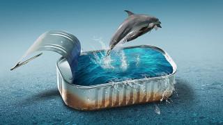 Банка, вода, дельфины