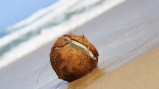 обои для рабочего стола 1920x1080 еда, кокос, орех, кокосовый, берег, вода