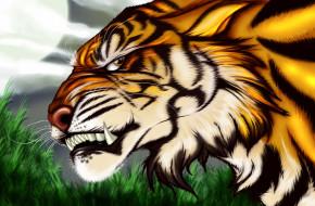 рисованное, животные, фон, тигр, оскал, взгляд