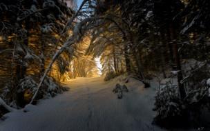 разное, компьютерный дизайн, лес, снег