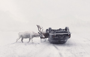 олень, зима, машина, дорога