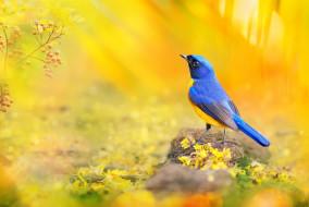 животные, птицы, птица, желтый, макро, солнечный, свет, ветка, яркая, боке, ягоды, лепестки, фотограф, синий, красочная, эуфония, тайвань