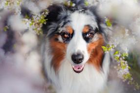животные, собаки, charlie, собака, весна, цветение
