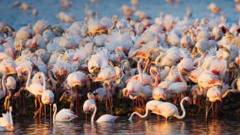 животные, фламинго