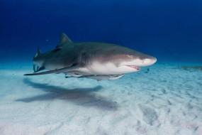 животные, акулы, хищник
