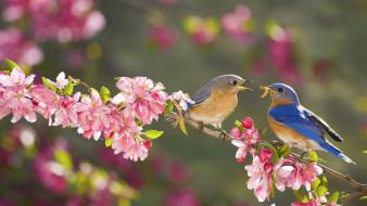 животные, птицы, ветка, цветы