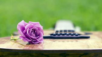 цветы, розы, гитара, лиловый