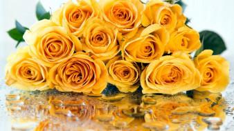 цветы, розы, отражение