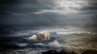 разное, компьютерный дизайн, art, медведи, лодка, скалы, море