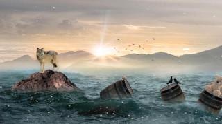 разное, компьютерный дизайн, art, закат, море, волк, скалы