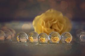 разное, капли,  брызги,  всплески, отражение, макро, роза, желтая, пузыри