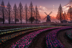 разное, мельницы, весна, цветы, тюльпаны