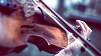 скрипач, скрипка, смычок, рука