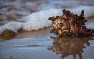 разное, ракушки,  кораллы,  декоративные и spa-камни, море, вода, ракушка, отражение