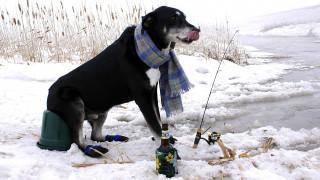 шарф, бутылка, удочка, зимняя, рыбалка, собака
