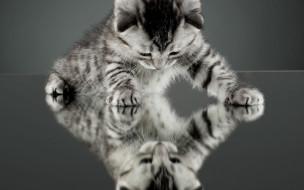животные, коты, зеркало, фон, обои, отражение, котенок, кот, кошка