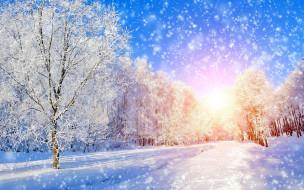 природа, зима, иней, деревья, снег