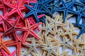 разное, ракушки,  кораллы,  декоративные и spa-камни, звезда, морская