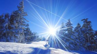 природа, зима, деревья, снег, Япония, солнце