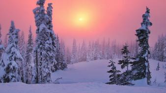 природа, зима, ели, солнце, закат, небо, лес, деревья, снег